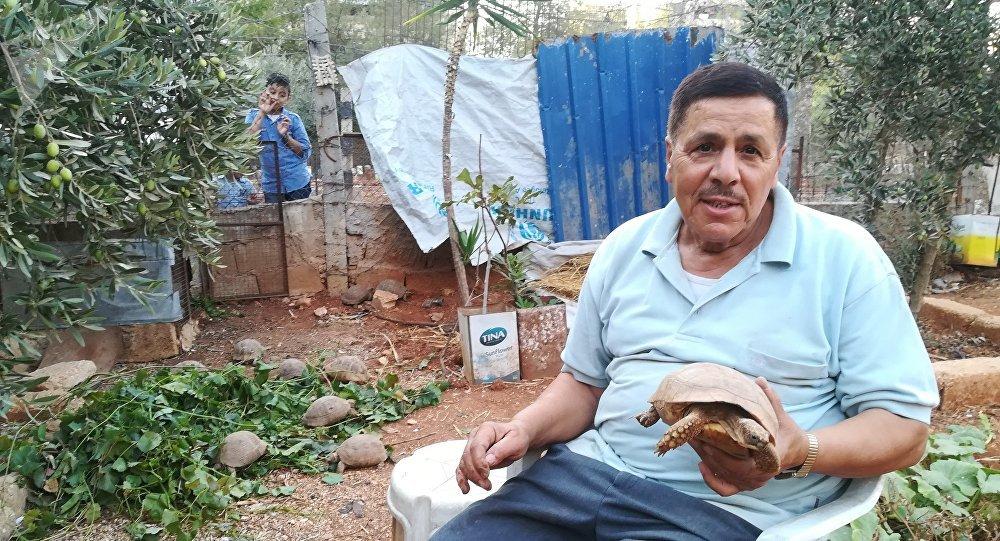 L'habitant d'Alep Mustafa Khalifah a sauvé des dizaines de tortues