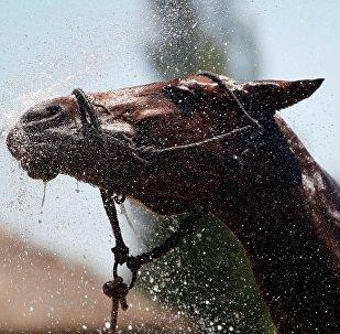 Un cheval, image d'illustration