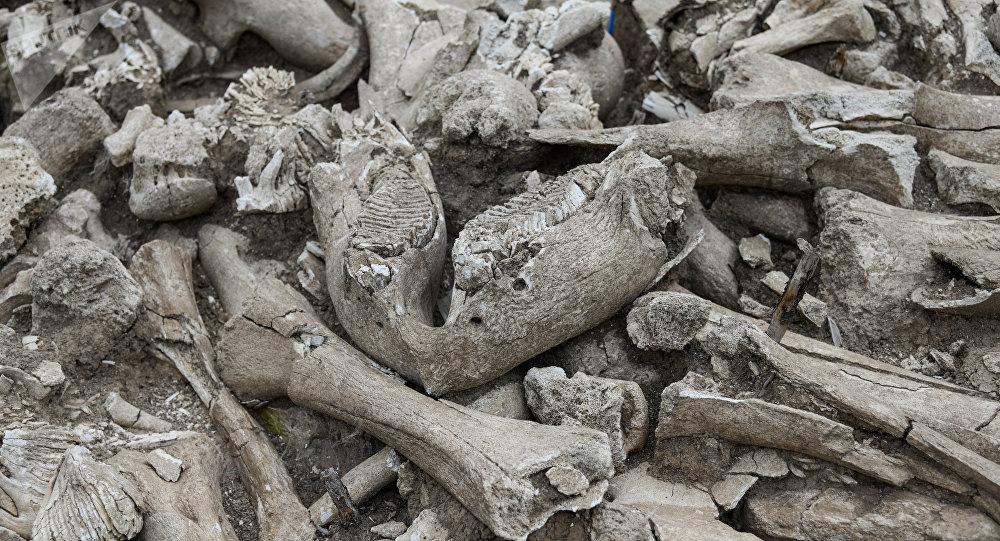 Des os humains (image d'illustration)
