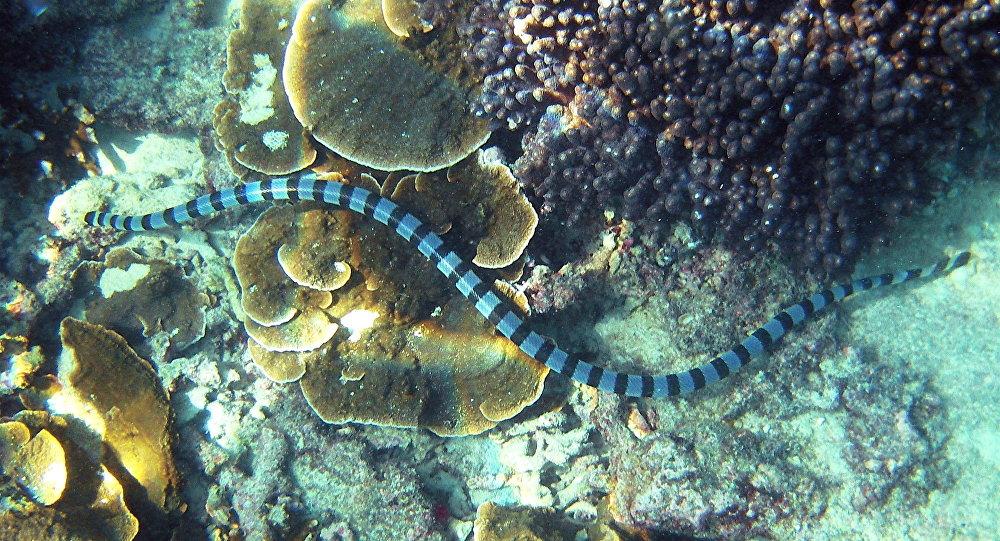 Un serpent de mer