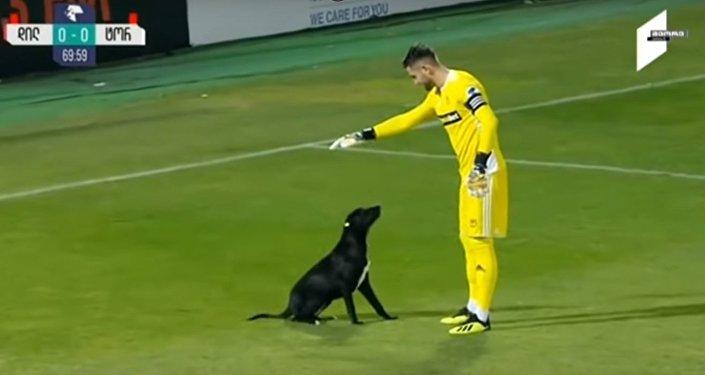 Les chiens eux aussi veulent jouer au foot!