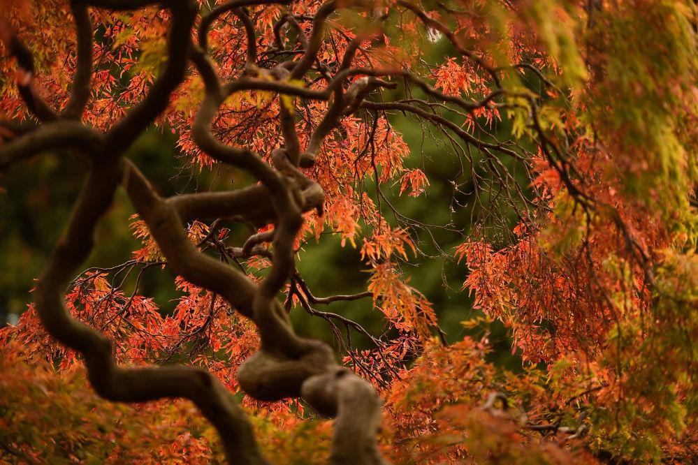 50 nuances d'automne