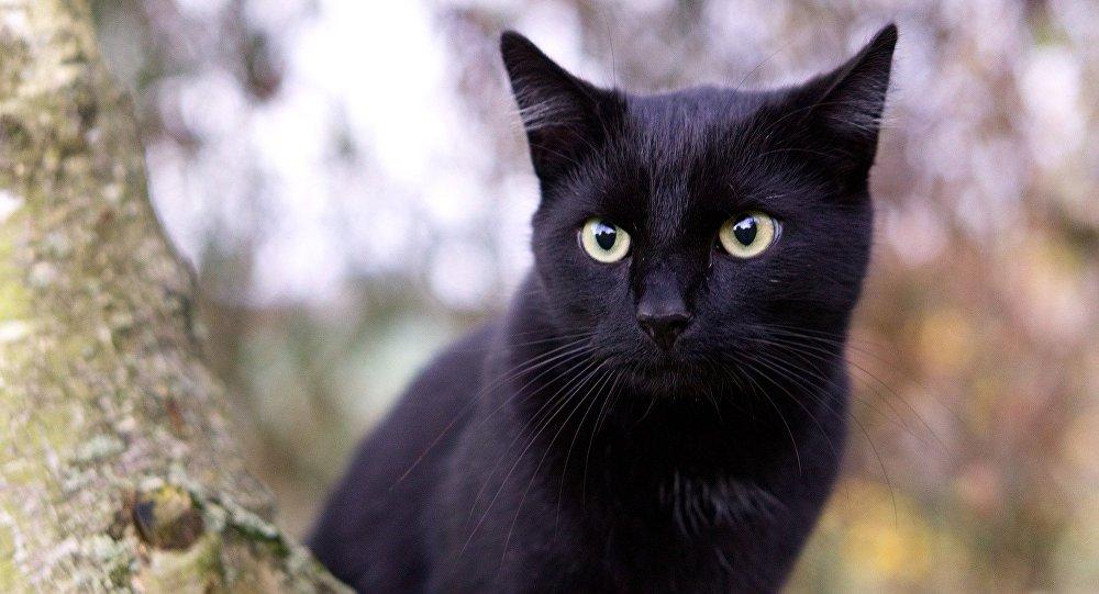 Un chat