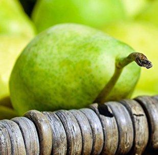 La presse signale une contrebande de poires européennes vers la Russie pour 240M EUR