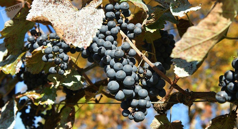 Une vigne