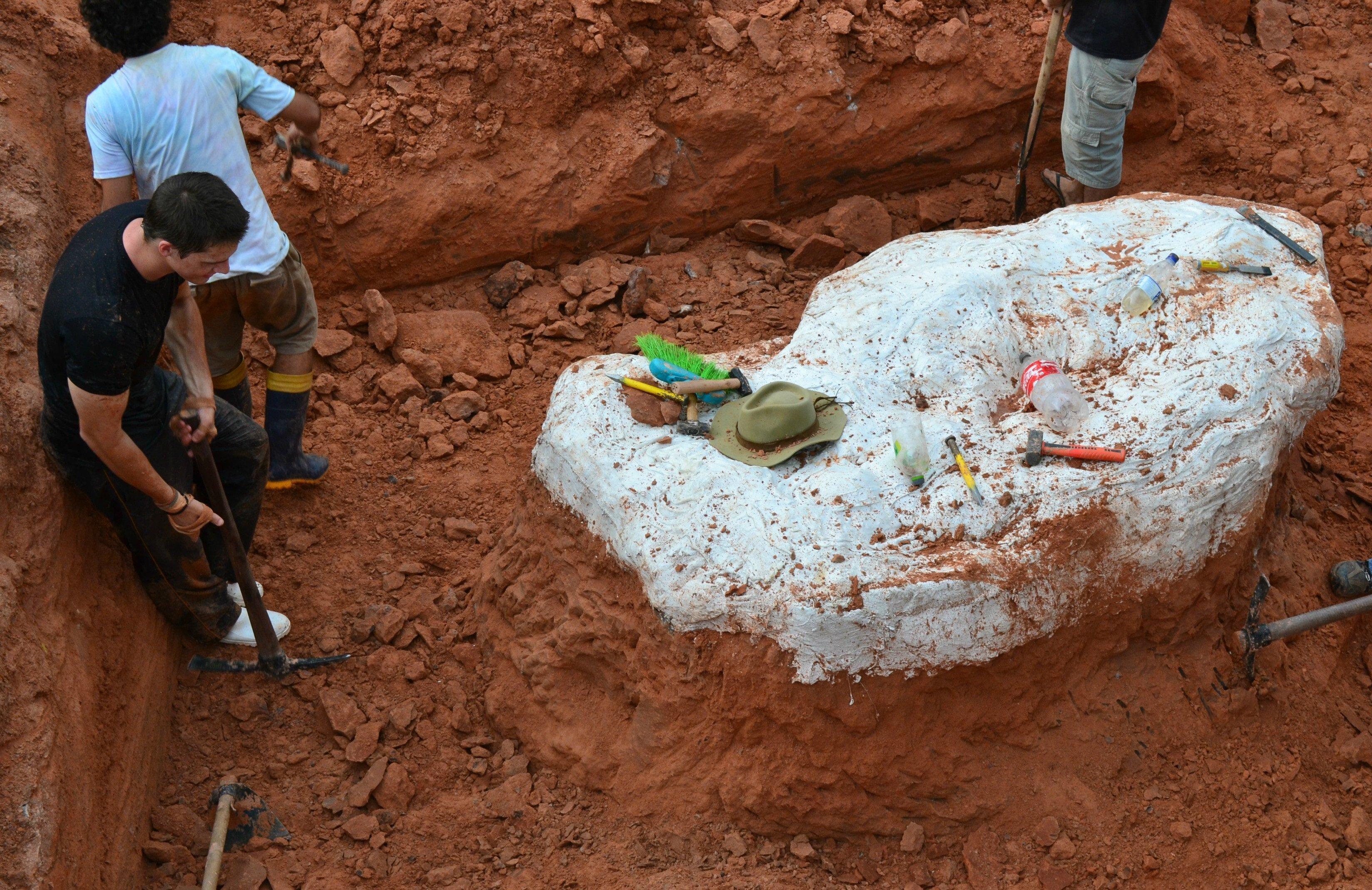 Déciouverte au Brésil d'une espèce de dinosaure jusqu'alors inconnue