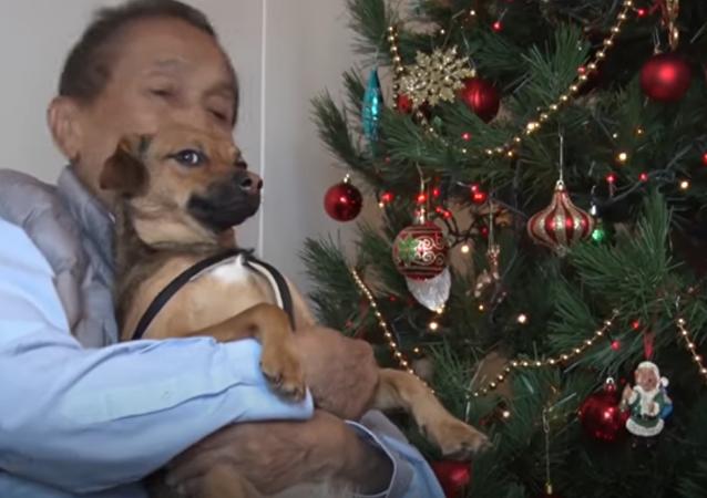 Voilà la vie de chien d'un canidé qui a trouvé une maison au Pérou grâce à la Coupe du Monde