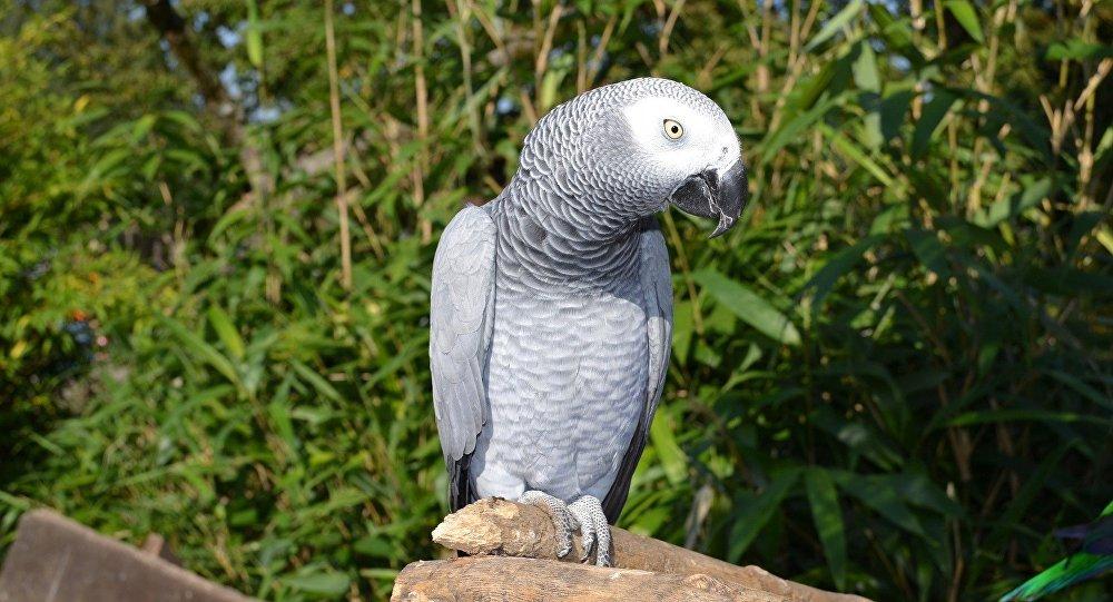 perroquet, image d'illustration