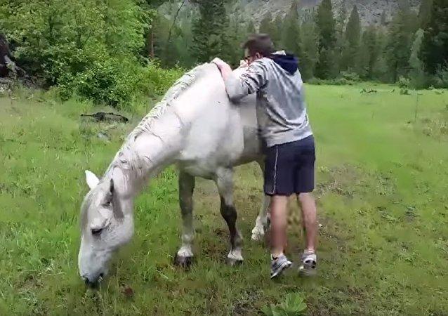 «Je ne suis pas ton jouet!»: un jeune homme échoue à monter à cheval