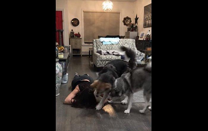 La réaction amusante de chiens à la «crise cardiaque» de leur propriétaire