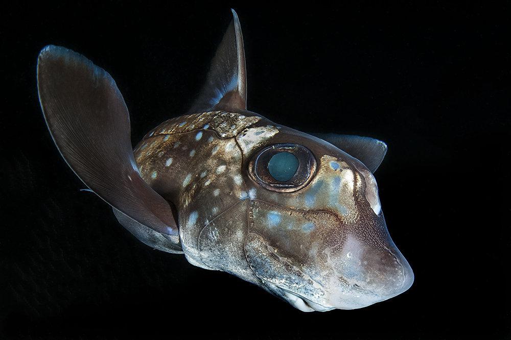 Au fond de l'océan: les meilleures photos sous-marines de l'année