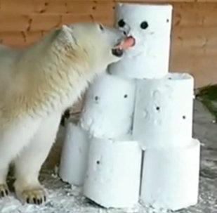Un ours polaire amateur de bonhommes de neige
