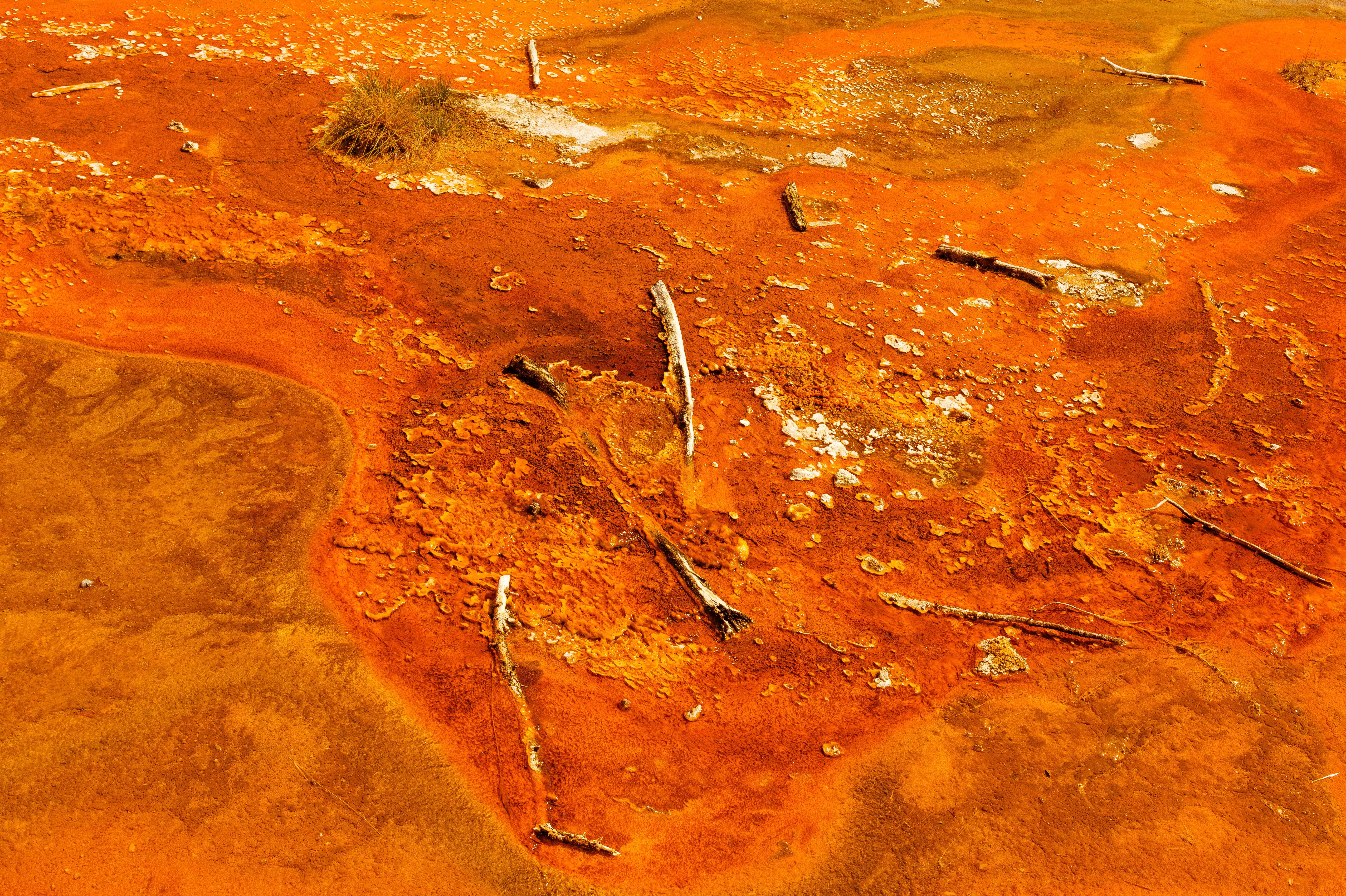 Une colonie de bactéries thermophiles des sources chaudes de Yellowstone