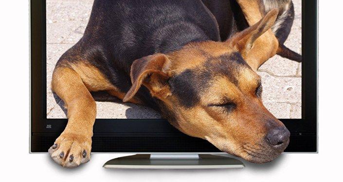Un chien et un poste de télévision