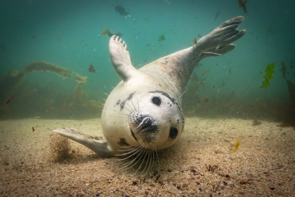 Lauréats du concours de photographie sous-marine Underwater Photographer of the Year 2019