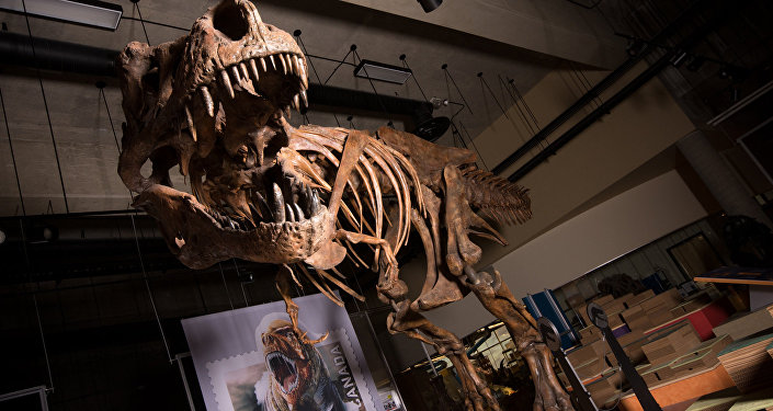 le squelette du Tyrannosaure rex baptisé Scotty