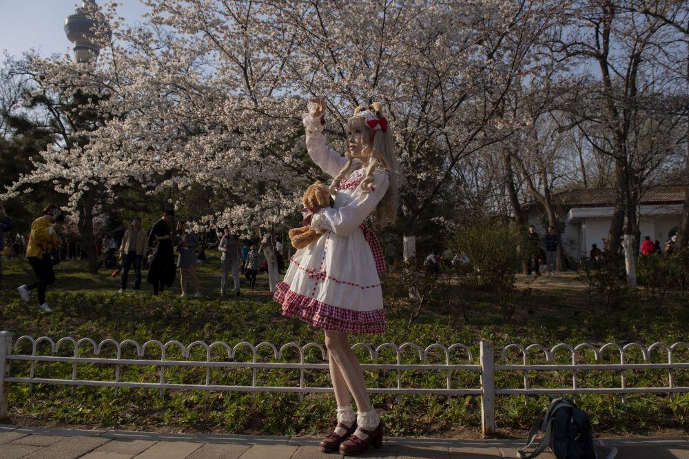 Beauté délicate des cerisiers au printemps: la floraison des sakura à travers le monde