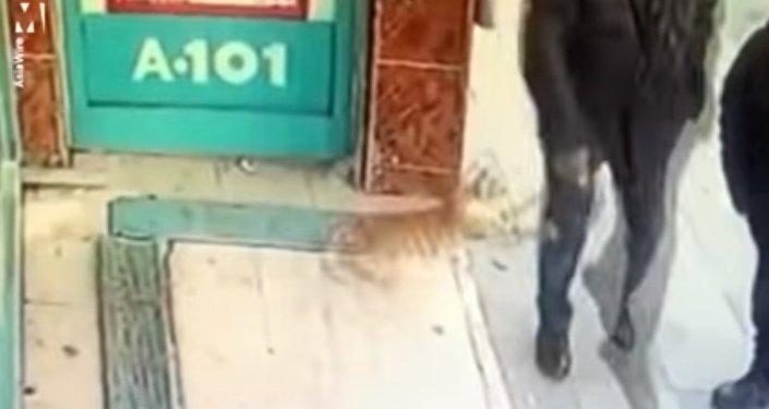 Un chat-féministe est apparu à Istanbul