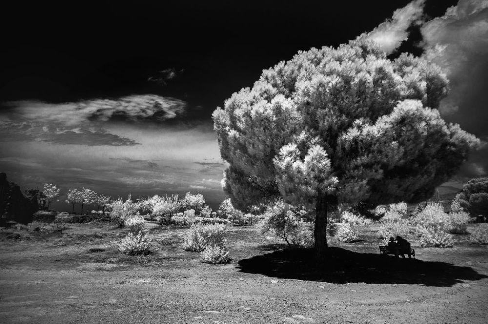 Travaux des lauréats du 1er concours international de photographie infrarouge