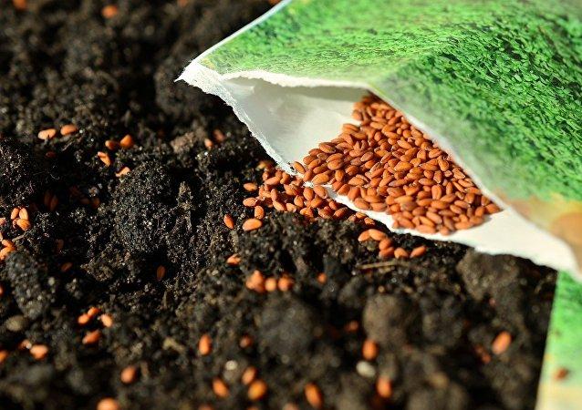Des semences (image d'illustration)