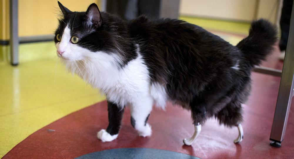 Un chat avec des prothèses