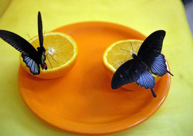 Oranges et papillons
