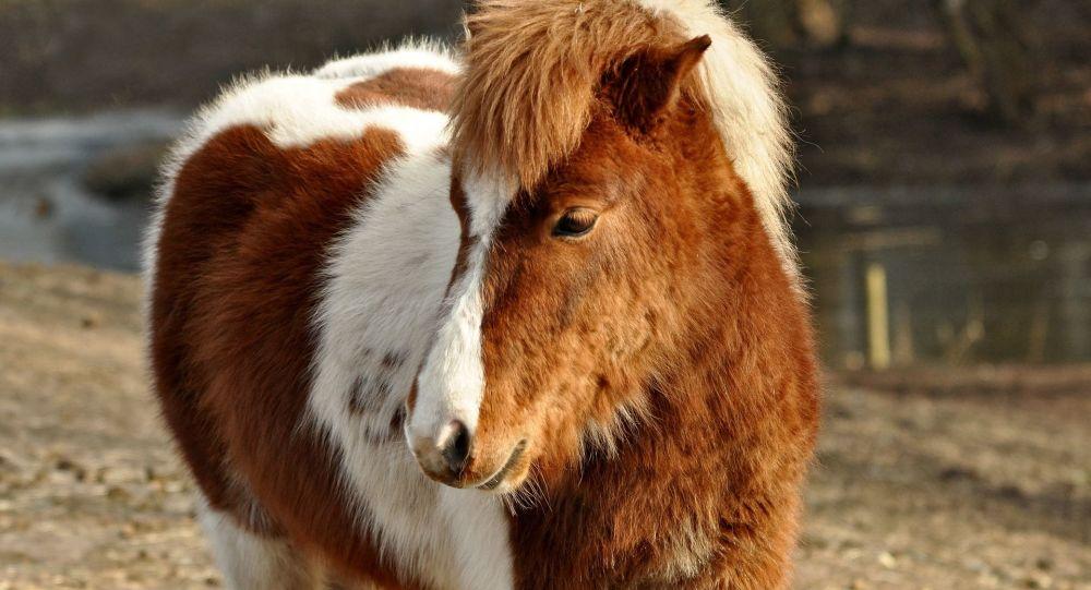 Пони, архивное фото