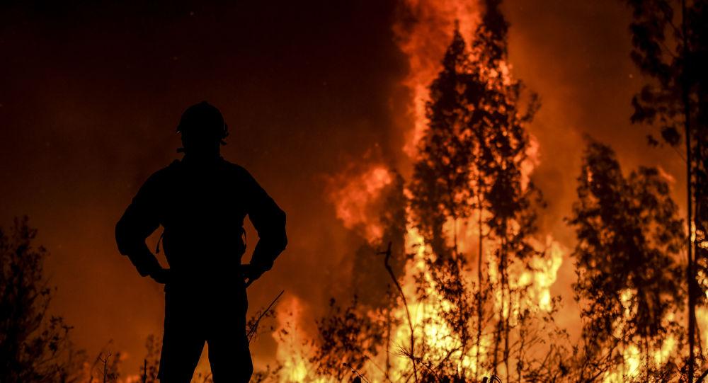 Un feu de forêt au Portugal le 21 juillet 2019
