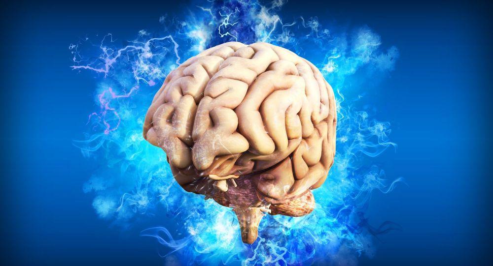 Le cerveau (image d'illustration)