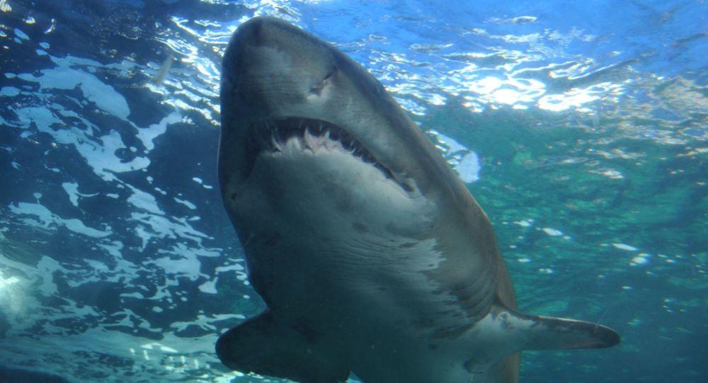 Un grand requin blanc surgit devant un bateau de pêcheurs, le capitaine «choqué» - vidéo