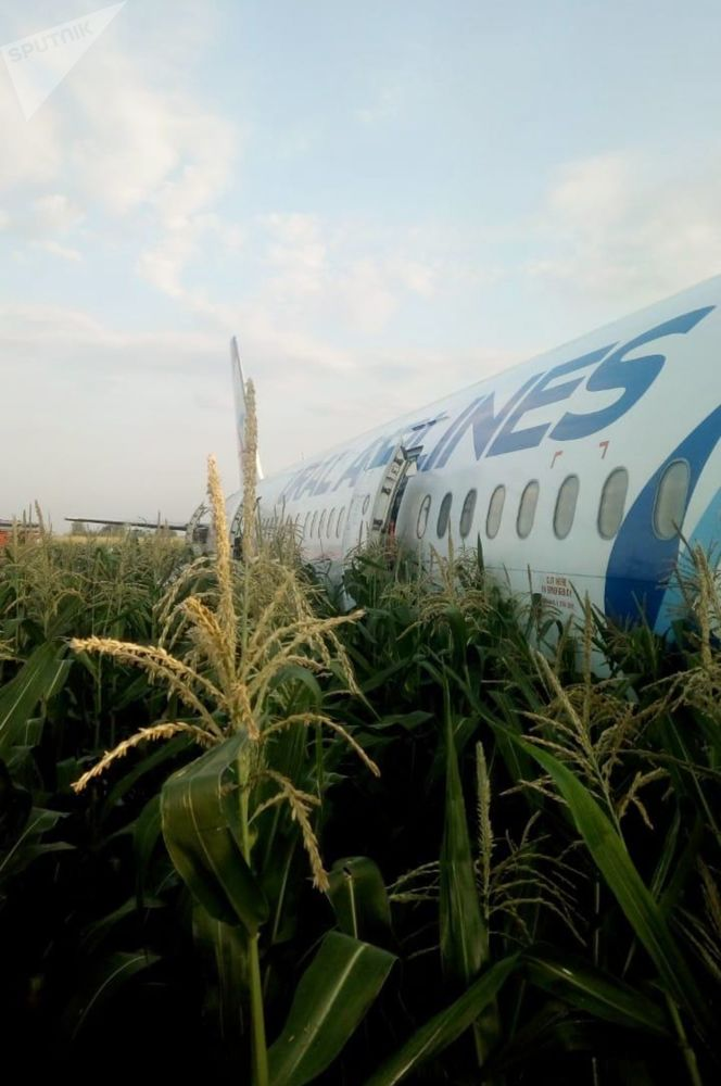 Un Airbus d'Ural Airlines après son atterrissage d'urgence dans la région de Moscou