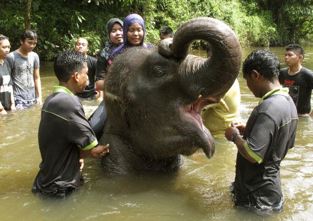 Kuala Gandah Elephant Conservation Center in Malaysia