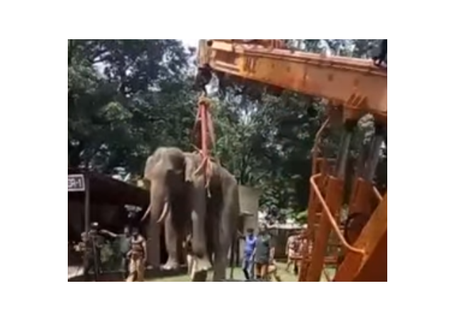 Elephant gets rescued from well using crane
