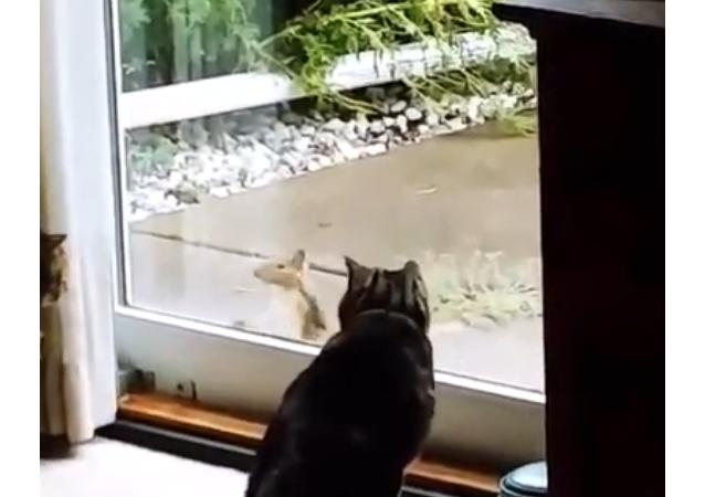 Un écureuil intrépide teste la solidité des nerfs des chats