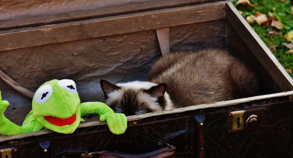 un chat dans une valise (image d'illustration)
