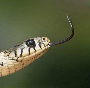 Serpent (image 'illustration)