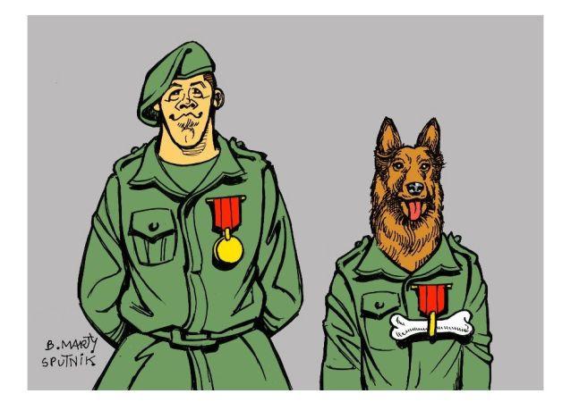 Le «chien héros» de l'armée US invité à la Maison-Blanche?