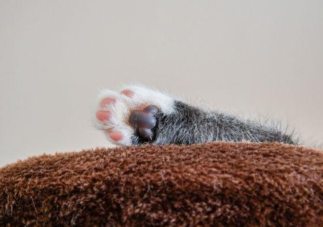 Patte d'un chaton
