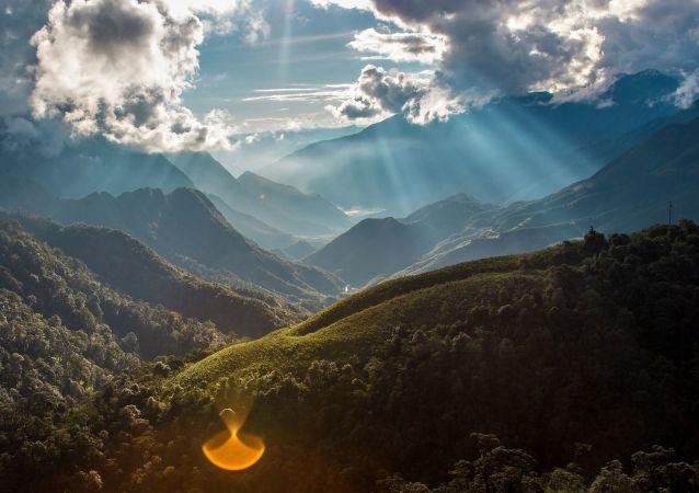 une forêt au Vietnam