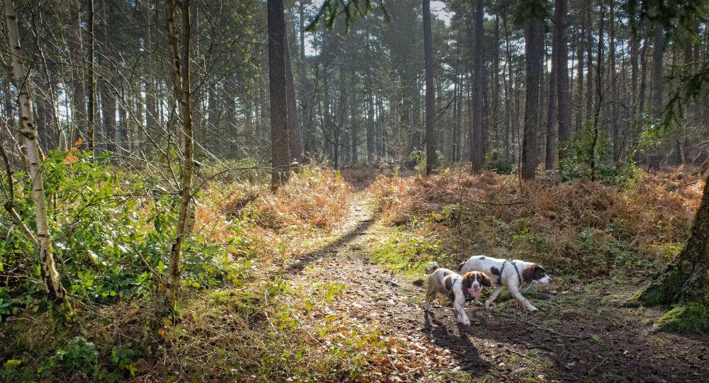 des chiens dans une forêt