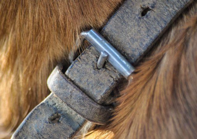 Un collier de chien