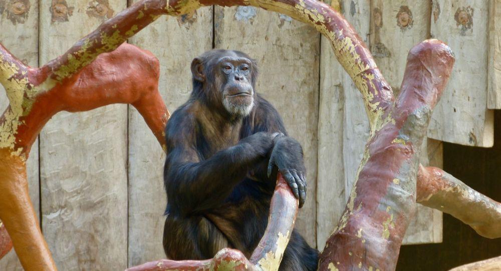 Des dizaines de singes tués dans l'incendie d'un zoo en Allemagne la nuit du Nouvel An - vidéo