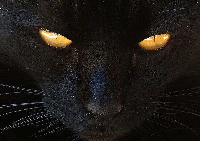 Un chat noir