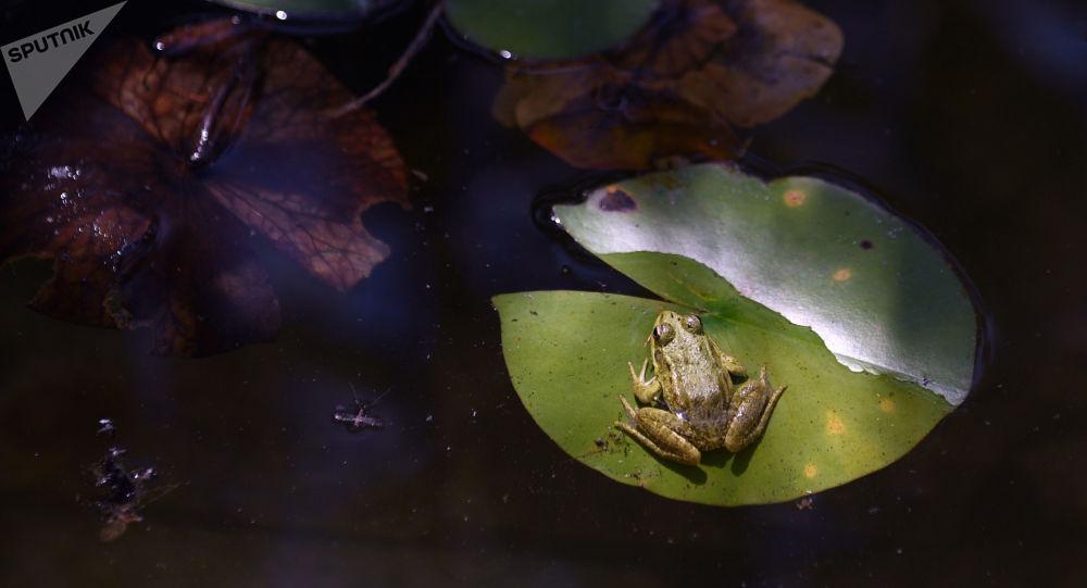 Une grenouille très heureuse prend une douche en Australie