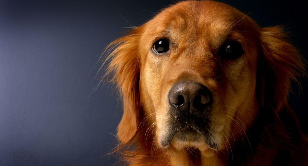 Un chien testé positif au coronavirus placé en quarantaine à Hong Kong