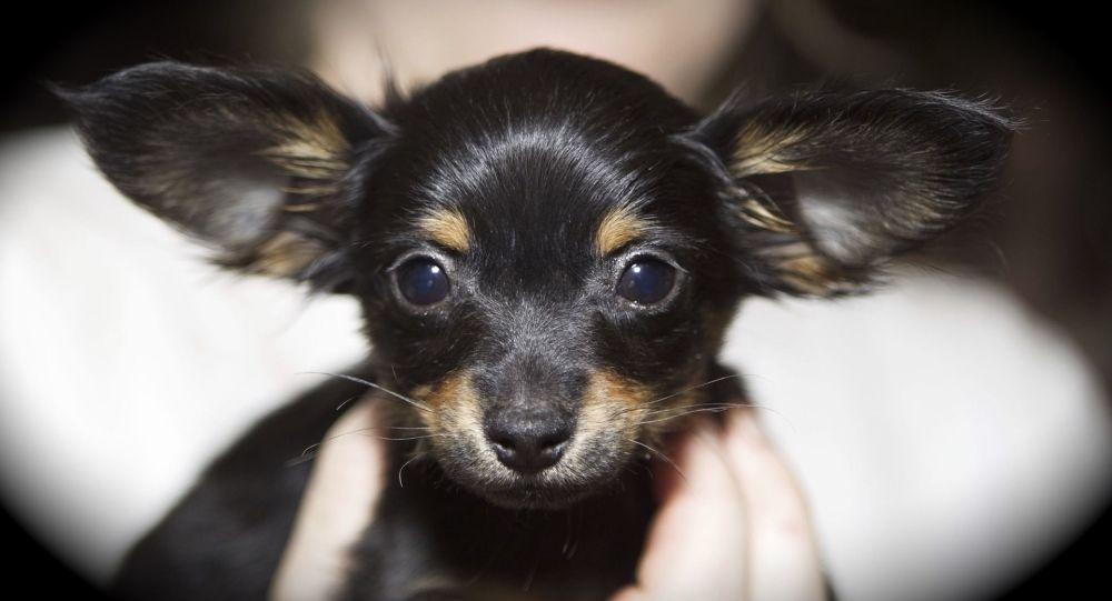 À la lecture du message déchirant attaché au collier d'un chien abandonné, cet homme fond en larmes - photo