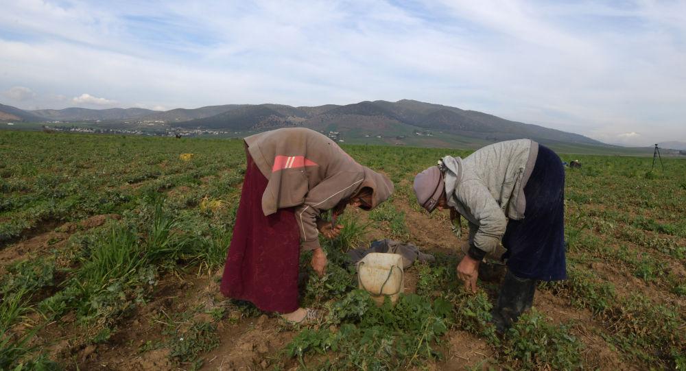 En Tunisie, les ouvrières agricoles victimes d'accidents mortels: la série noire continue!