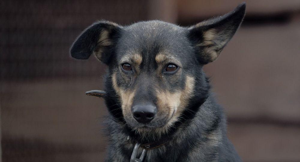 Une trentaine de chiens maltraités découverts attachés dans un bois en Dordogne