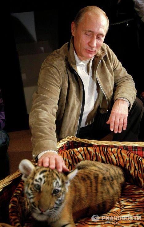 Владимир Путин представил подаренного тигренка