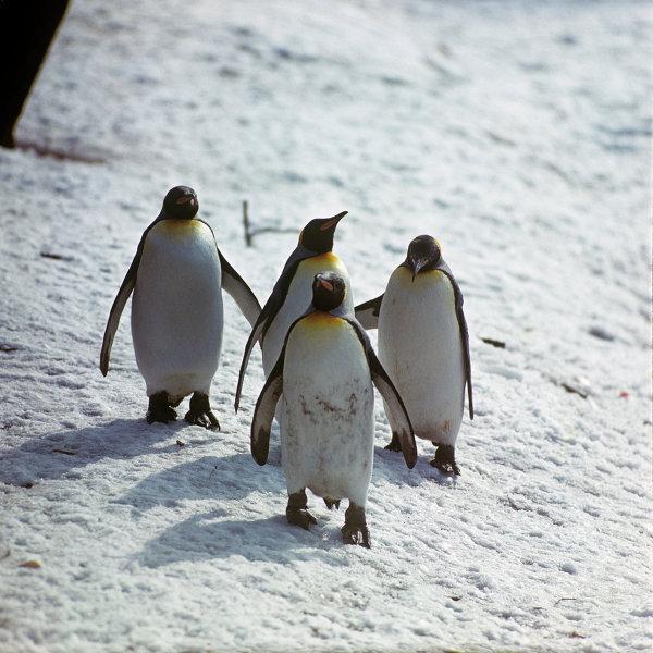 Московский зоопарк. Пингвины